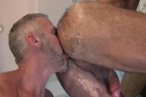 Ripped mature Bears plow